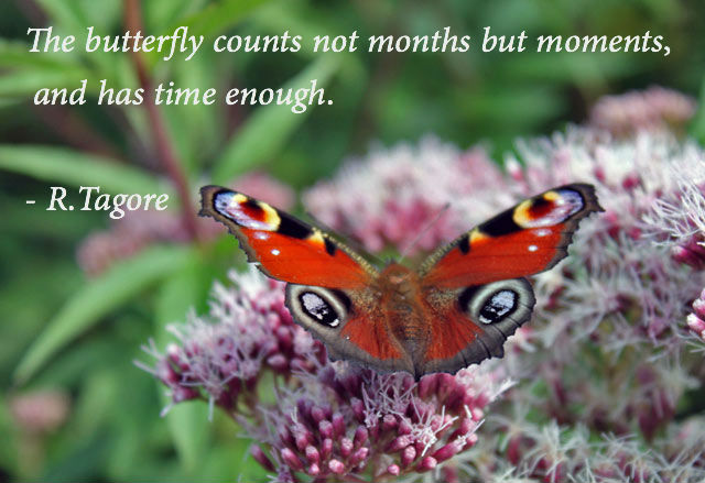 tagore-butterfly